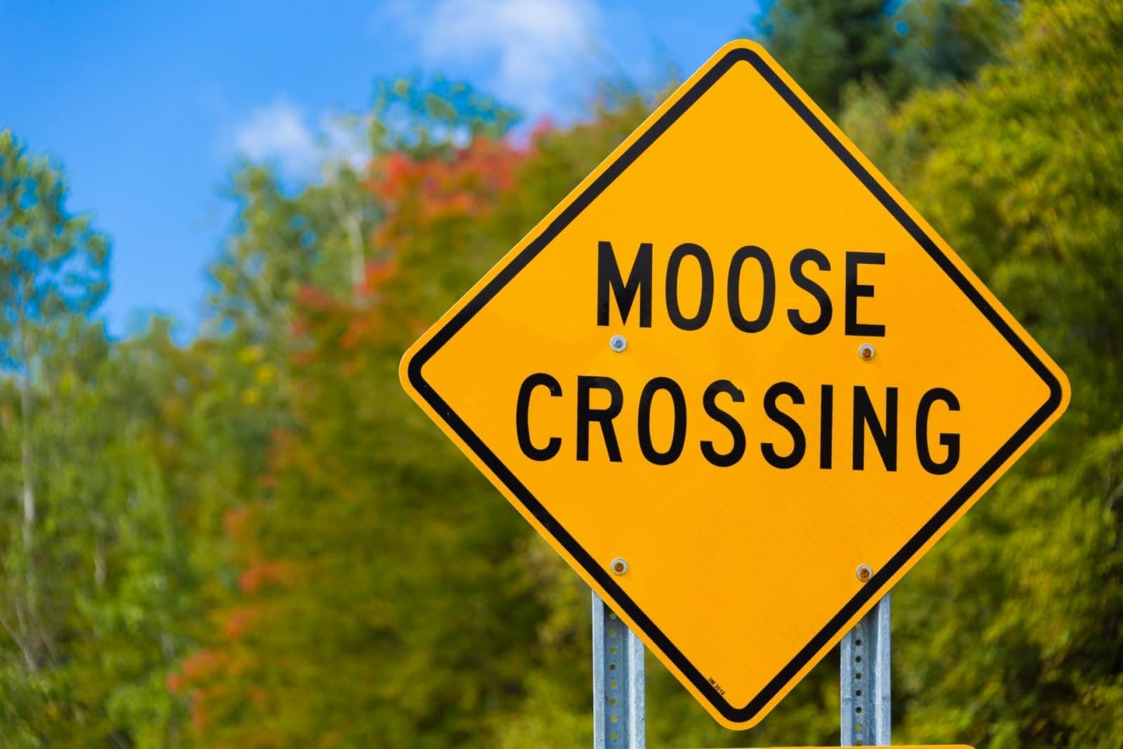 SPOTTING A MOOSE IN MAINE