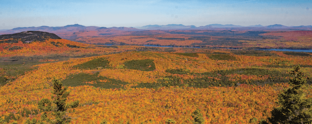 Maine GUIDED WILDERNESS HIKE